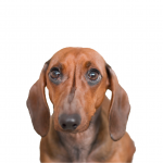 eliminador olor mascotas