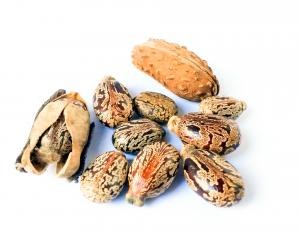 natural-mood-semillas-ricino2