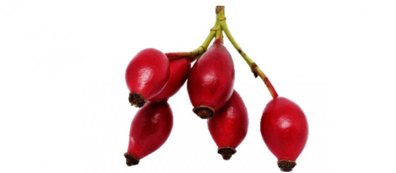 rosa-mosqueta-ingrediente
